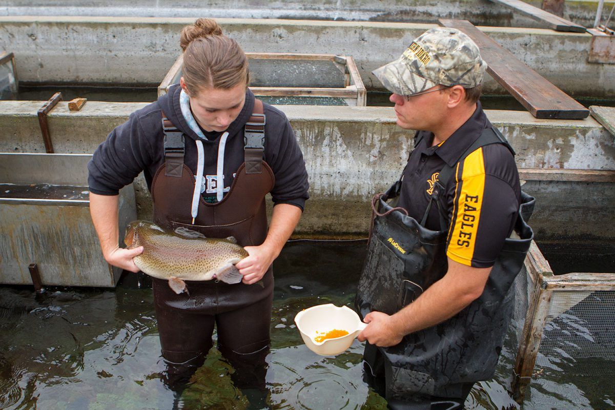 Student and teacher milking fish